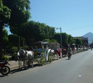 Gran - horses