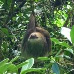 Mas - sloth 1