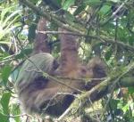 Mas - sloth 3